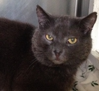 The 'ball's' in your court: This rescue cat deserves a forever home