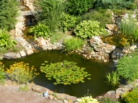 Seven Elms garden party featured enchanting water garden