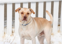 Boadie, who's got energy to burn, needs an owner to warm to