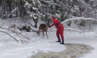 Maine man's attempt to save deer nearly cost him his life