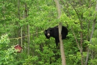 Let's reduce the confrontation risk to a 'bear' minimum