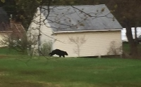 Residents urged to take precautions in wake of bear sightings