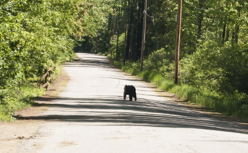 Game Warden spokesman: This is hungry time for bears
