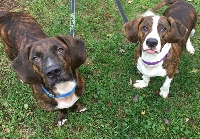 Bassett buds want to stay together, but need your help