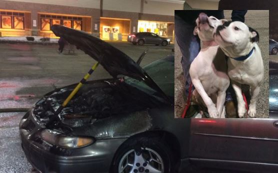 YCSO captain, Good Samaritan rescue dogs from burning car