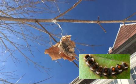 Time to scratch away at brownfield caterpillars, lest you get the itch later