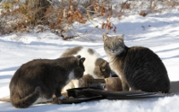 Helping outdoor cats will give you and them a warm feeling inside