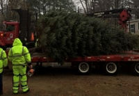 City's Christmas tree in place; trimming begins Monday