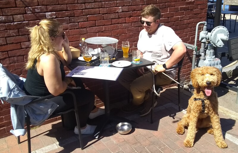 Downtown restaurants going to the dogs ... and the dogs (and owners) are loving it