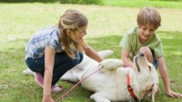 Interplay between kids, Fido too often left unchecked, unsupervised