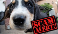 AG's warns consumers of fraudsters selling pets online