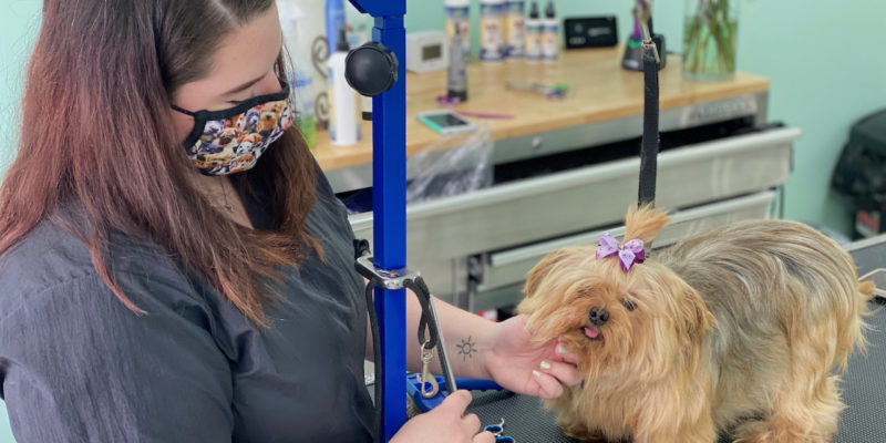 La Pooch Dog Spa: the salon where every dog has its day