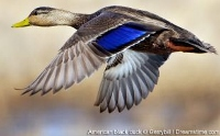 Waterfowl season meeting scheduled for March 22