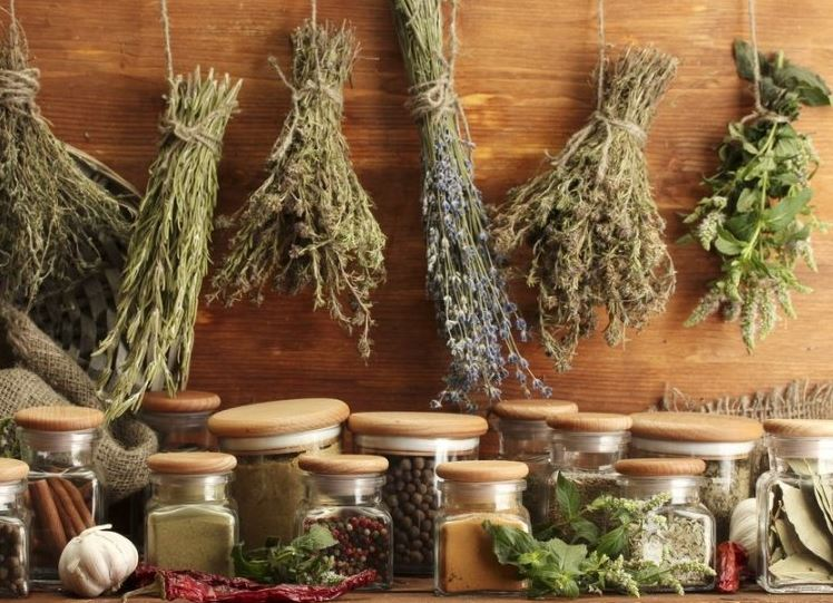 Drying herbs takes center stage at garden club meeting