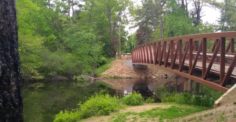 Forester to lead 'walk and talk' at Hanson Pines May 27
