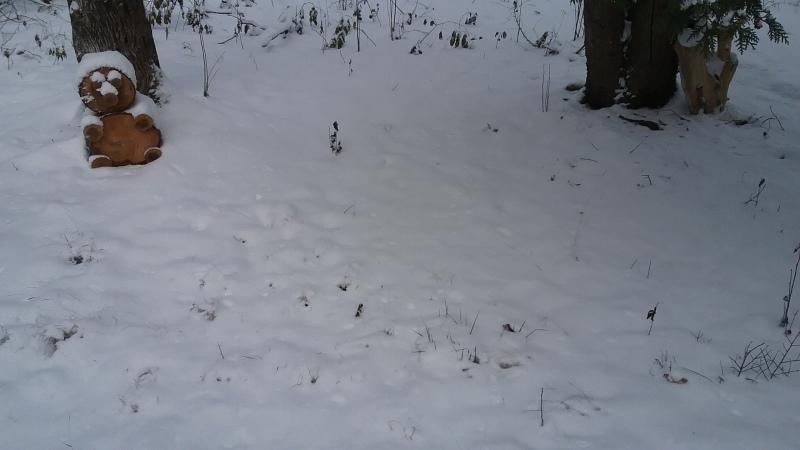 Season's first snowfall 'bearly' felt by Northern Seacoast