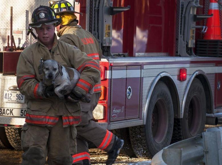 Mobile home destroyed in blaze, but pet dog, turtle OK