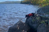 Divers, dogs to continue search today for missing York canoeist