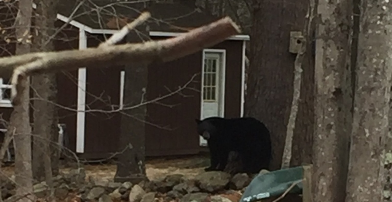 The bears be out in Lebanon, Milton, so it's time to take bird feeders down ... now!