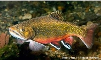N.H. trout and fly fishing-only ponds open next week