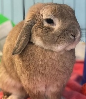 Albus would love to hippity hop right into your heart