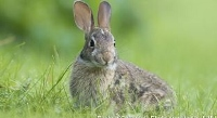 Wildlife biologists ask public's help in rabbit survey