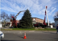 Arrival of Rochester's Christmas tree puts city in fest mode