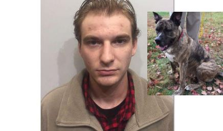 Rochester man arrested in tasing of dog as 'discipline'