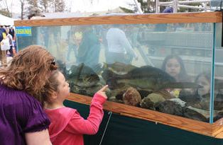 Free wild nh day features exhibits demonstrations the for Plenty of fish nh